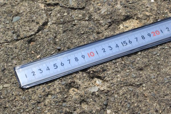30cm定規