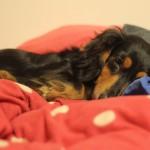 愛犬が急性胃腸炎で赤色の嘔吐と赤い便(糞)を…計5日間のまとめ